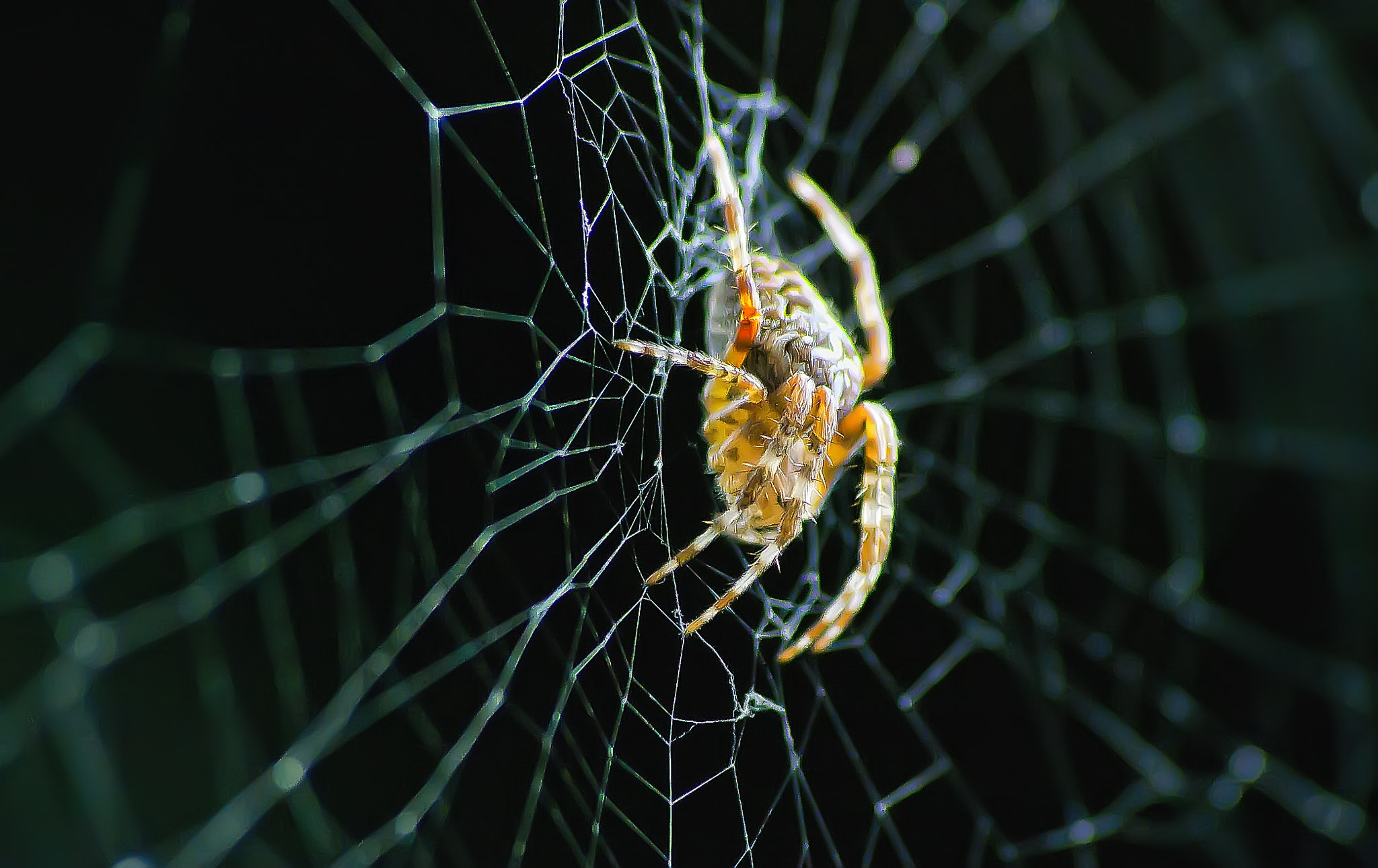 Photograph SPIDER NIGHT by Giacomo Zannini on 500px