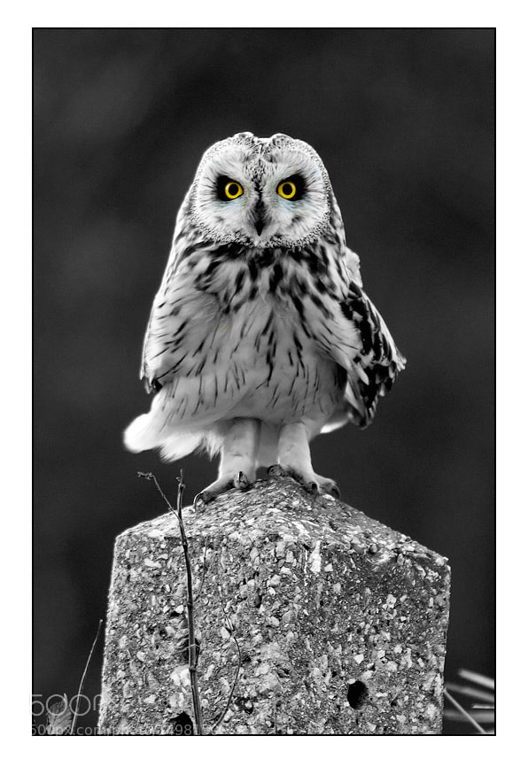 Photograph Who you looking at 2 by Tony Flashman on 500px