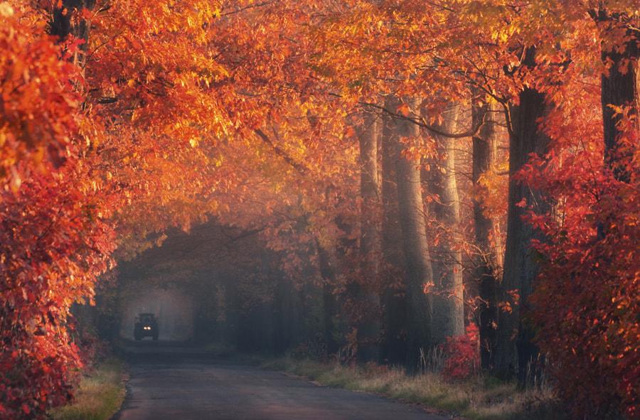 Autumn tractor by Paweł Uchorczak on 500px.com