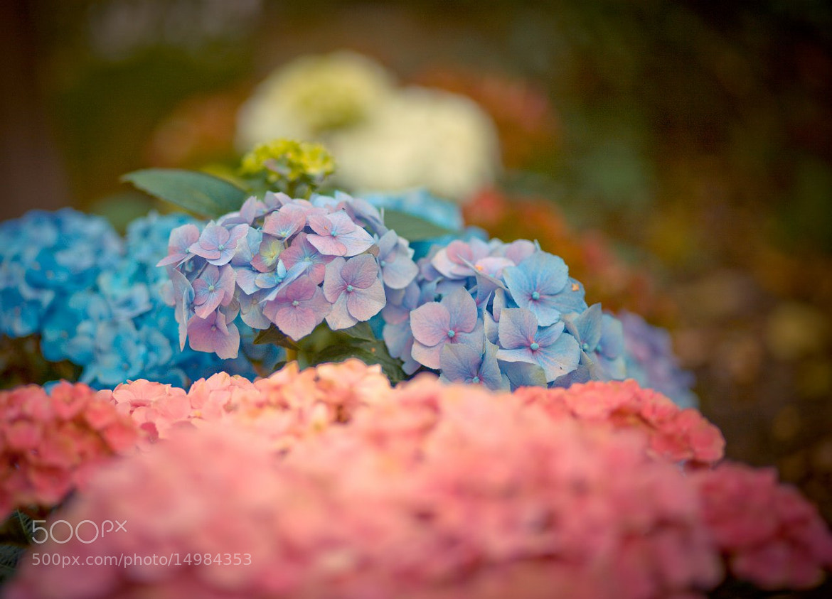 Photograph flowers of the past summer by Marina Chirkova on 500px