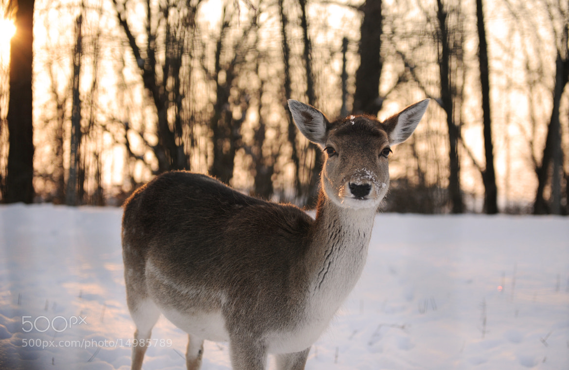 Photograph Bambi by Federica Provini Fotografie on 500px