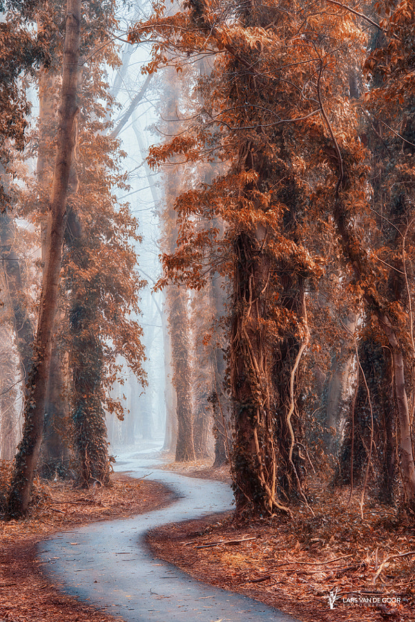 Path without a name by Lars van de Goor on 500px.com