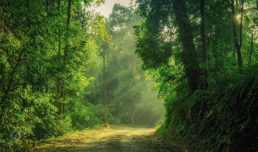 A walk to remember by Dipan Dutta choudhury on 500px.com
