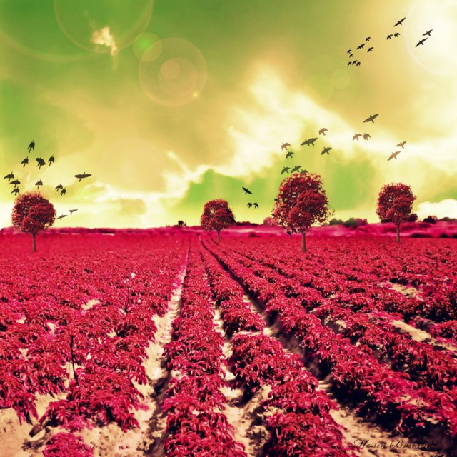 Photograph The red field. by Moses Benson on 500px