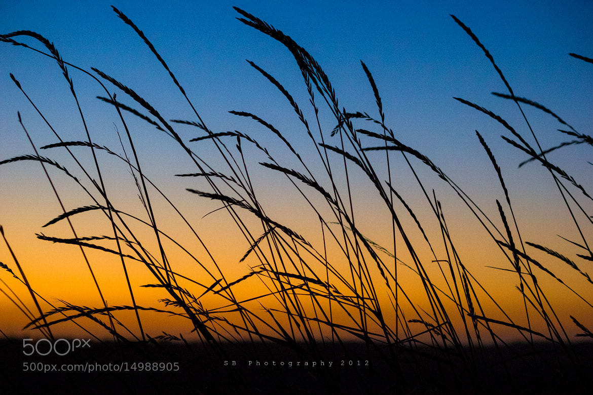 Photograph Grass Silhouette by Sean Byrne on 500px