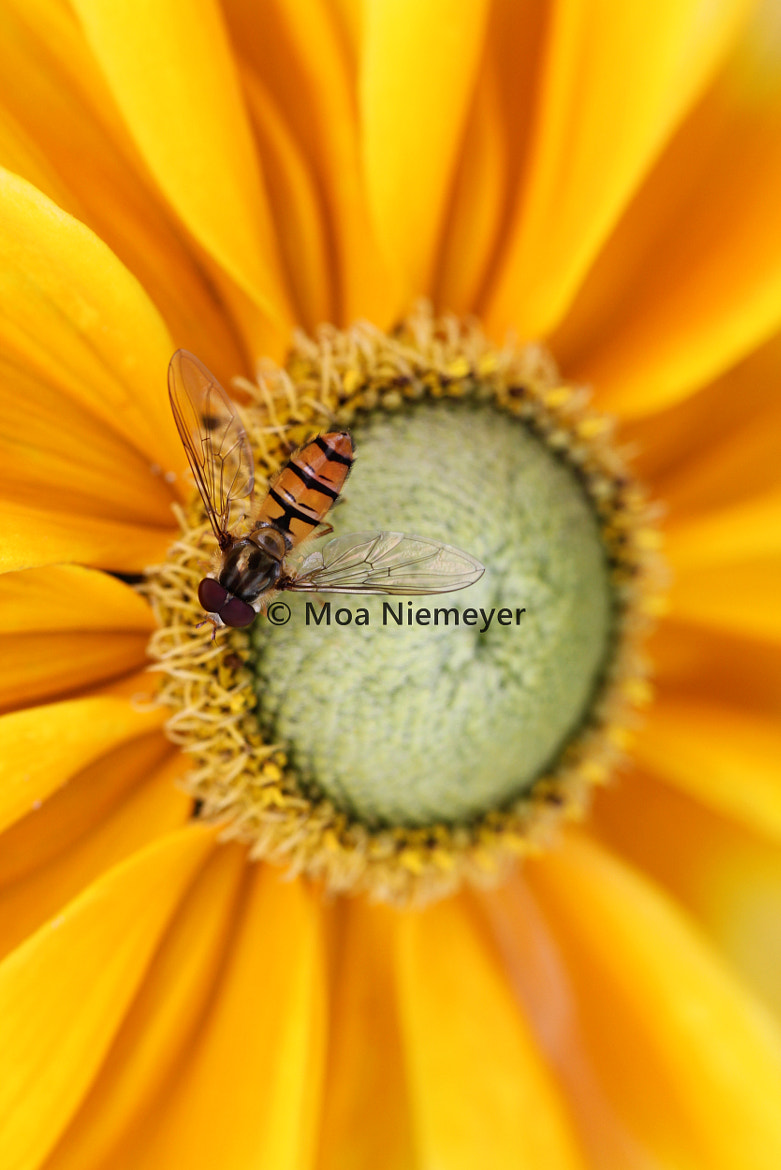 Photograph Matched by Moa Niemeyer on 500px