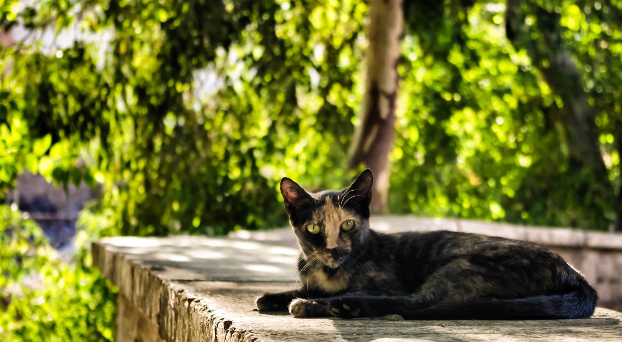 Photograph Cat, gato, chat by niko Kaptur on 500px
