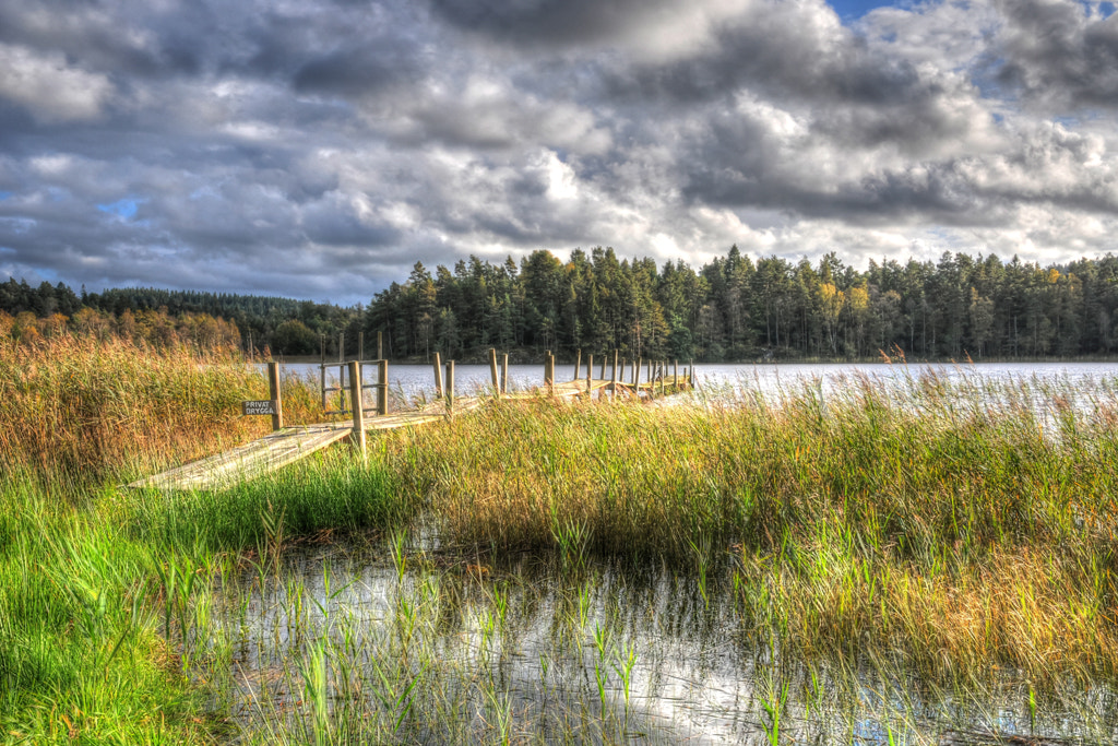 Photograph The jetty in the reeds by Almqvist Photo on 500px