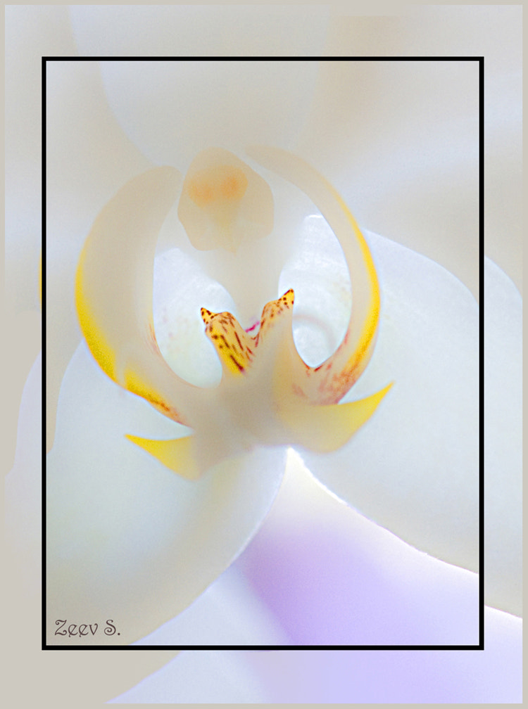 Photograph Orchid by zeev stein on 500px