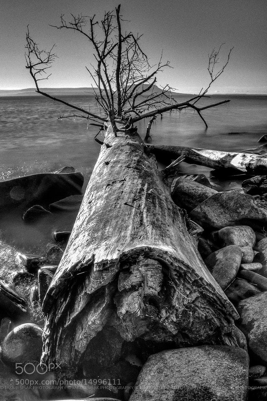 Photograph Driftwood by Jakub Šišák on 500px