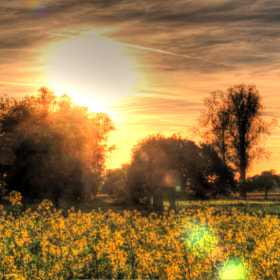 goodevening autumn by Danny Schurgers (Dannyschurgers)) on 500px.com