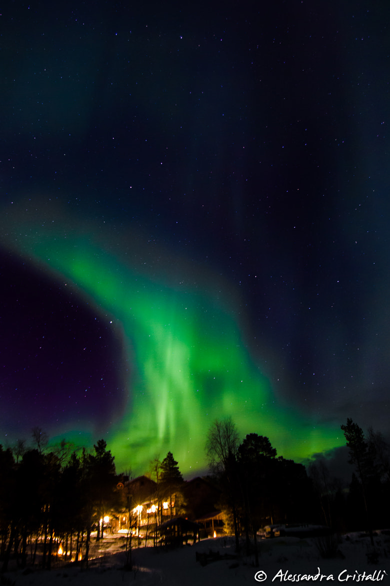 Photograph Northern Lights by Alessandra Cristalli on 500px