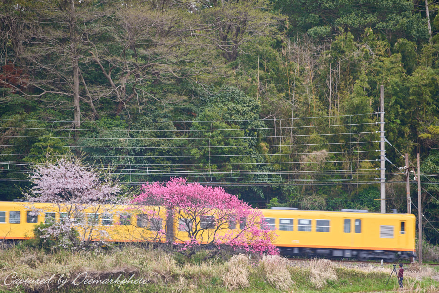 500px.comのDeemarkさんによるFlowers and train