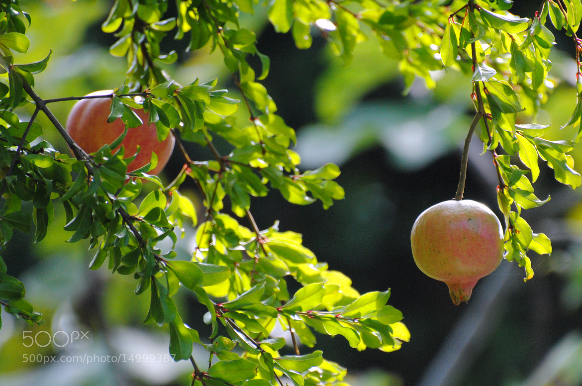 Photograph Pomegranate_2 by Umberto Forlini on 500px