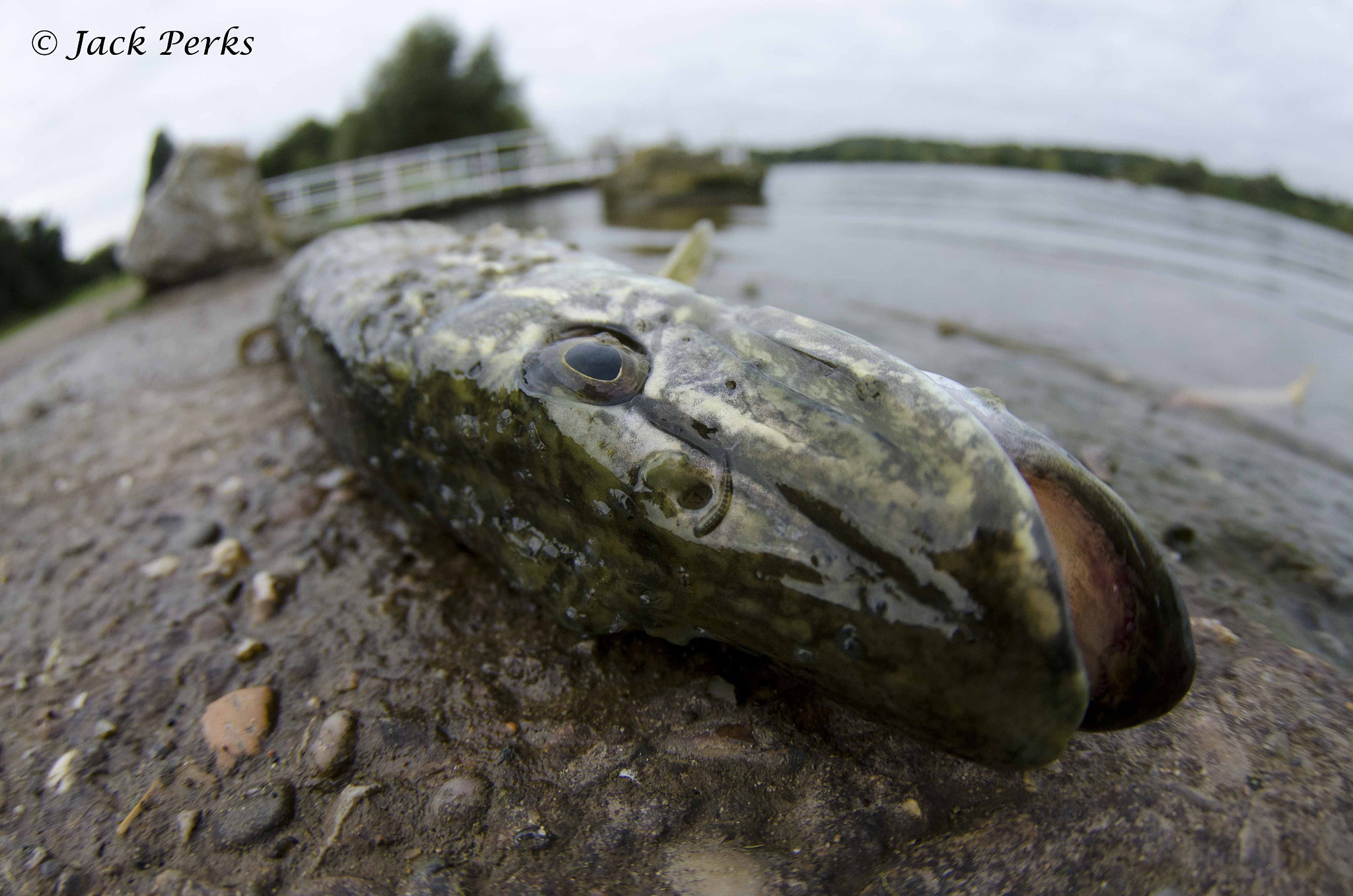 Photograph Dead Pike by Jack Perks on 500px