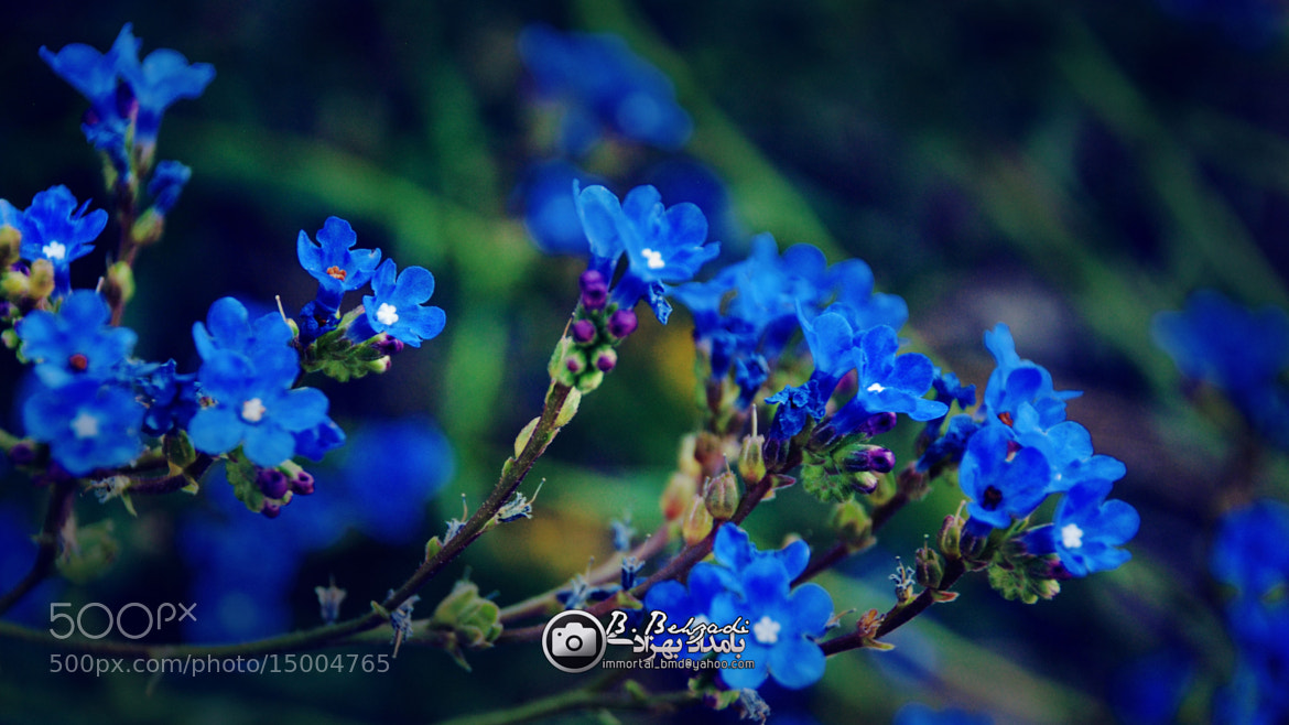 Photograph blue and beauty by Bamdad Behzadi on 500px