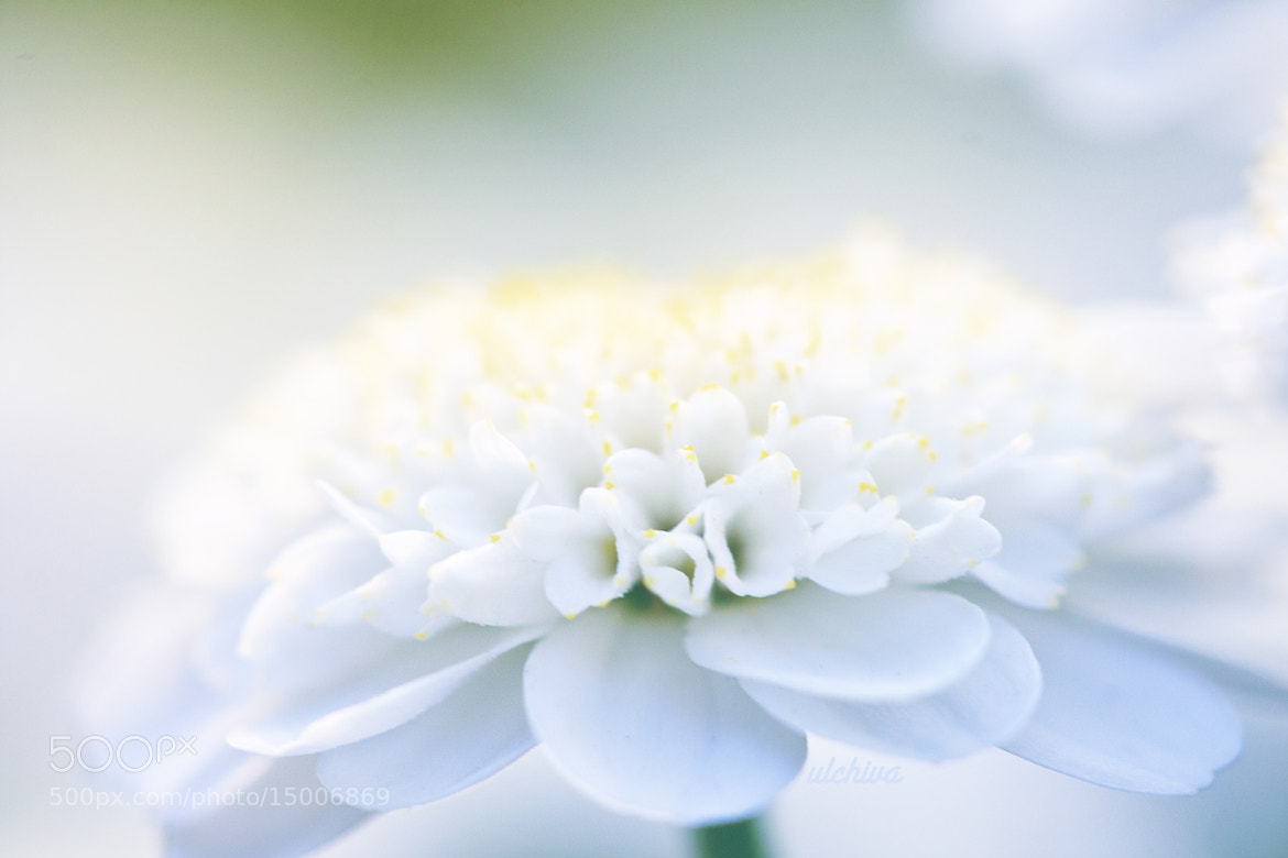 Photograph Untitled by Julia Iva on 500px
