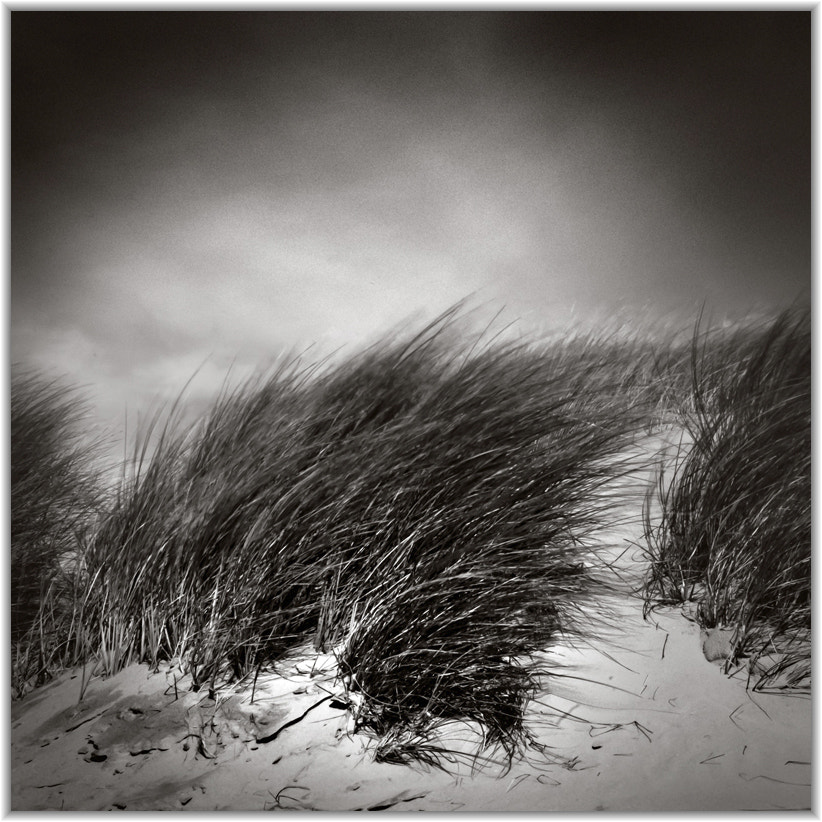 Photograph wind in the dunes by vincenzo Monaco on 500px