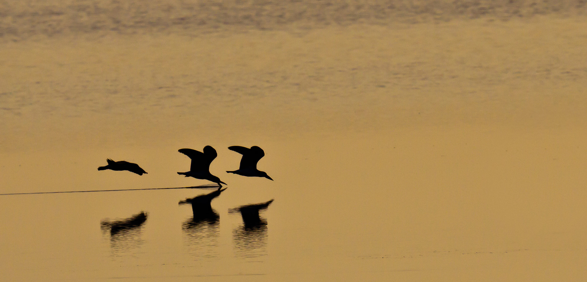 Photograph Skimmers at dawn by Tom Grigsby on 500px