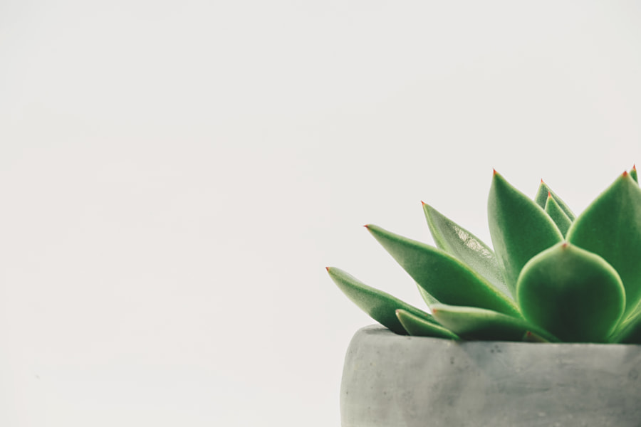 Potted Succulent - Off Center by Scott Webb on 500px.com
