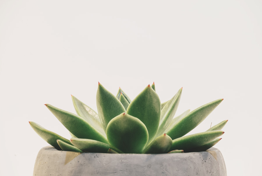 Potted Succulent - Centered by Scott Webb on 500px.com