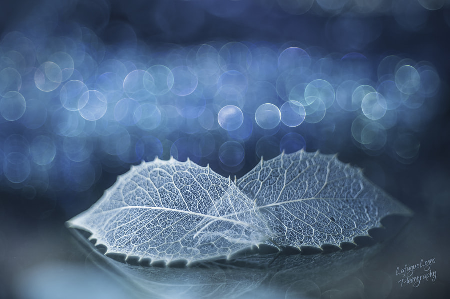 in the stilly night by Lafugue Logos on 500px.com