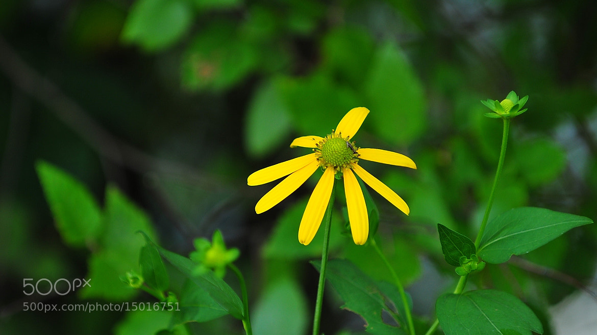 Photograph beauty in nature by Aruna Dangol on 500px