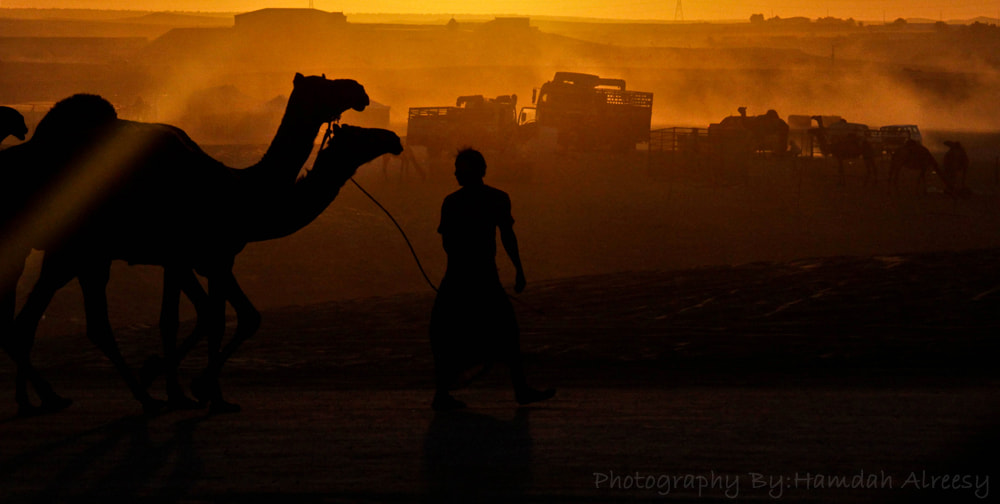 Photograph camel sunset by Hamdah Alreesy on 500px