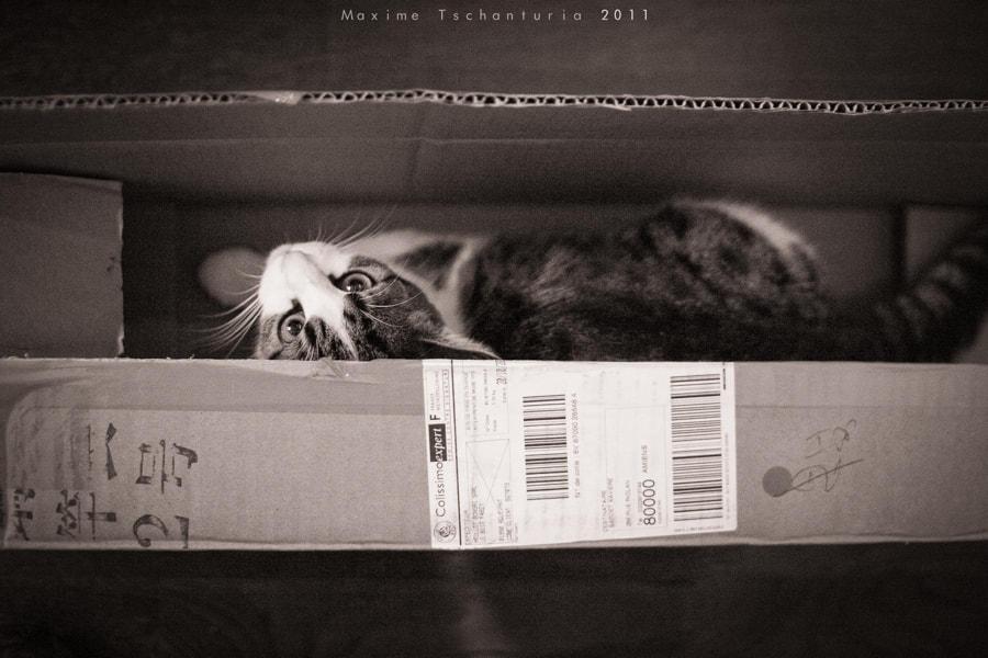 Photograph Give me a box by Maxime Tschanturia on 500px