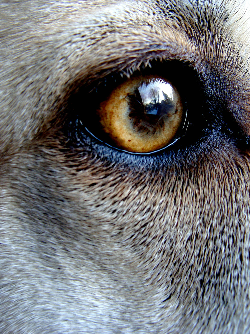 Photograph Canine by Lora Doerfer on 500px