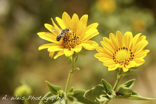 Photograph Busy Bee and lady Bug! by Ann Weis on 500px