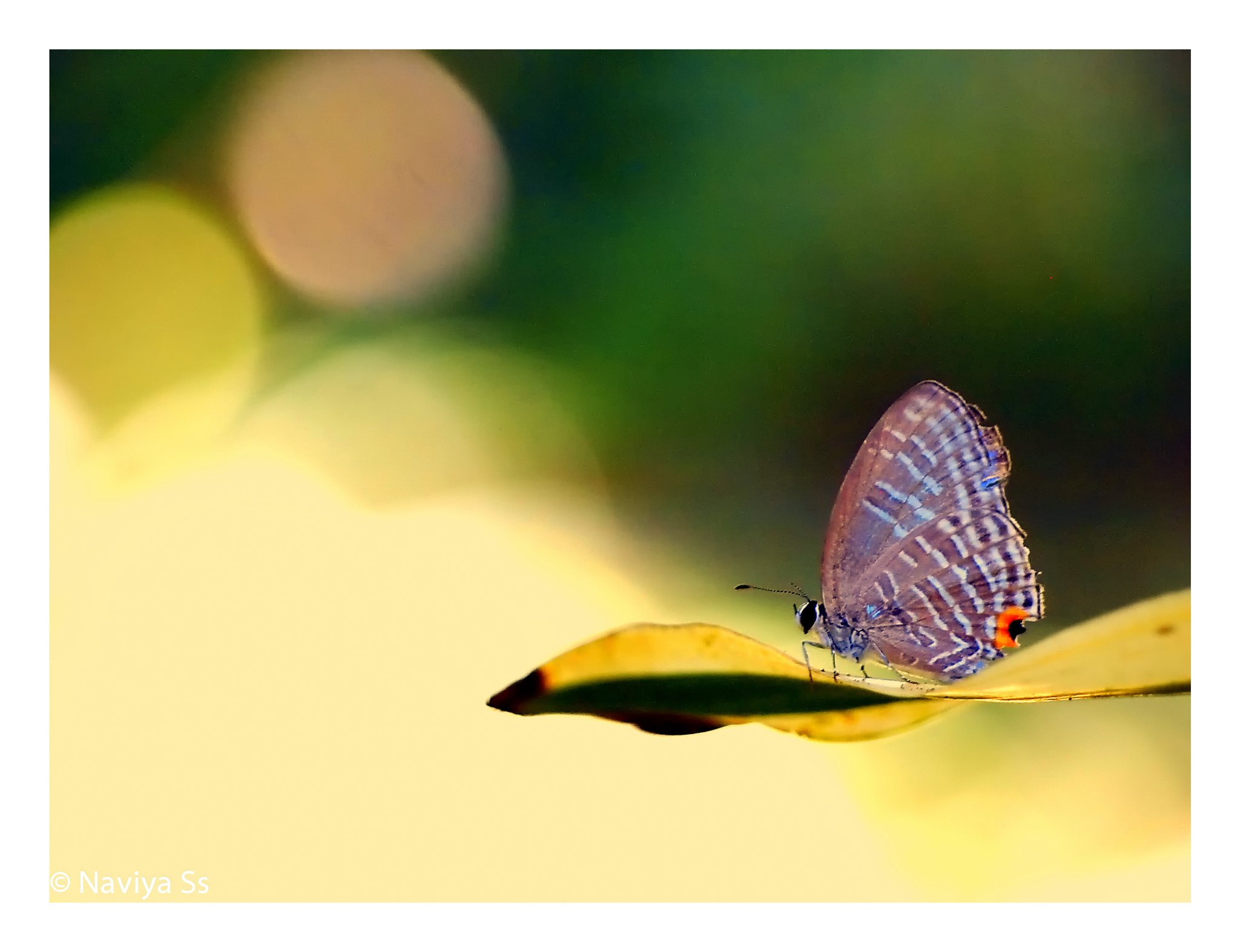 Photograph Ready to fly by Naviya Ss on 500px