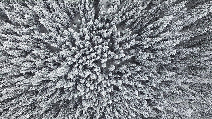 Frozen Pine Forest From the Air by Ognian Medarov on 500px.com