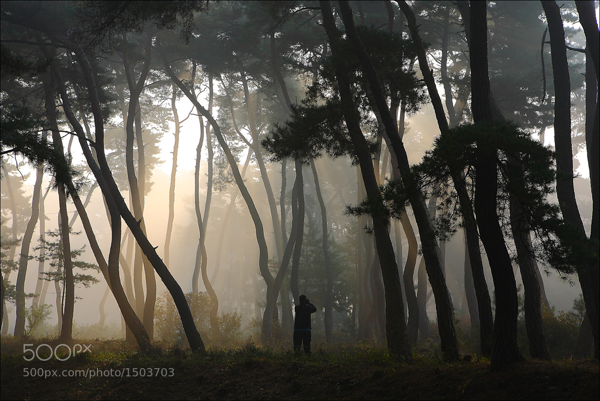 Photograph In the fog by keehwan Kim on 500px