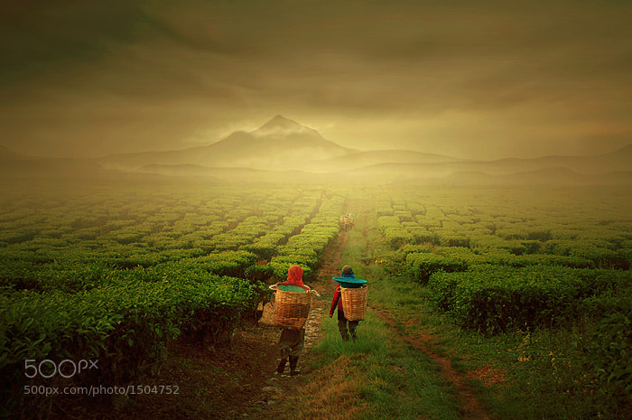 Photograph tea farmer by Teuku Jody  Zulkarnaen on 500px