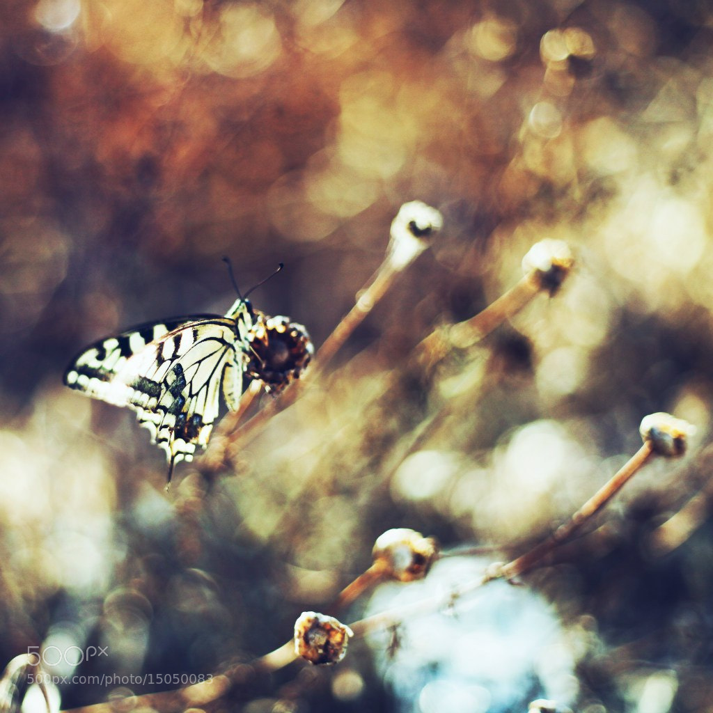 Photograph Untitled by Мария Корнеева on 500px