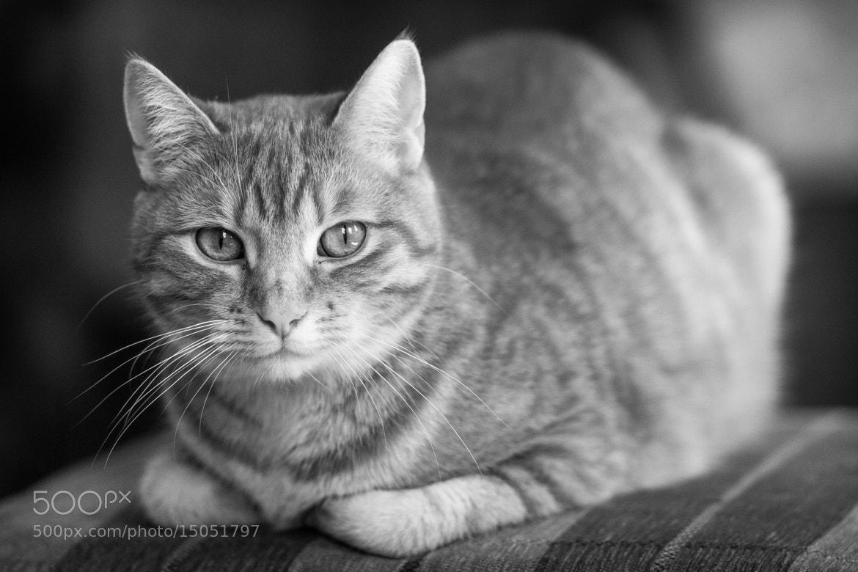 Photograph Rudy by Jakub Ostrowski on 500px