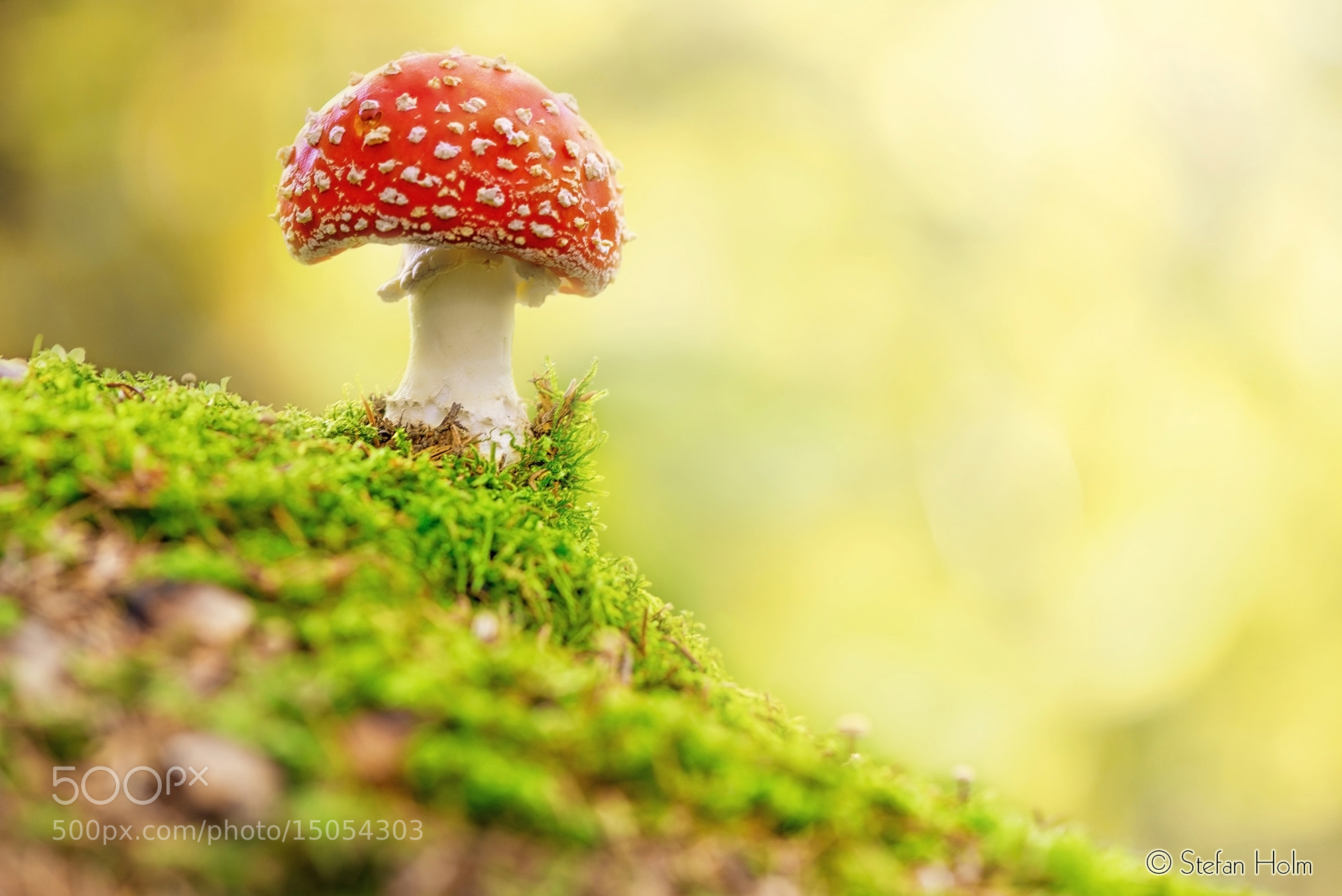 Photograph Fly Agaric in forest by Stefan Holm on 500px