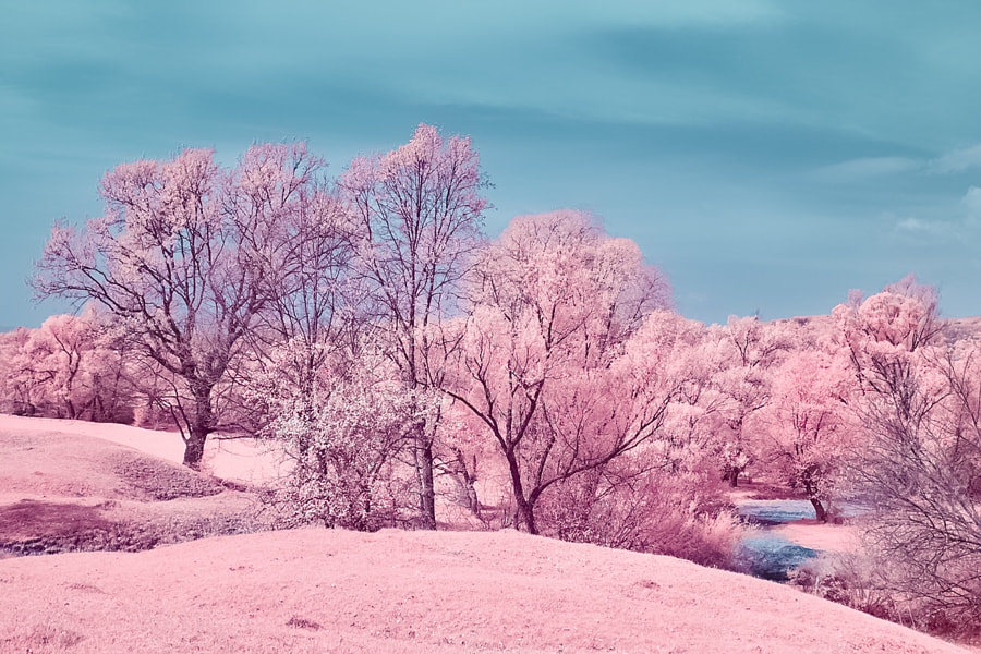 Infrared landscape, the author - Costin Mugurel on 500px.com
