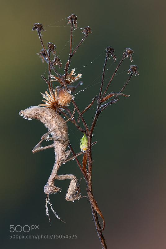 Photograph in its nature by Alberto Di Donato on 500px