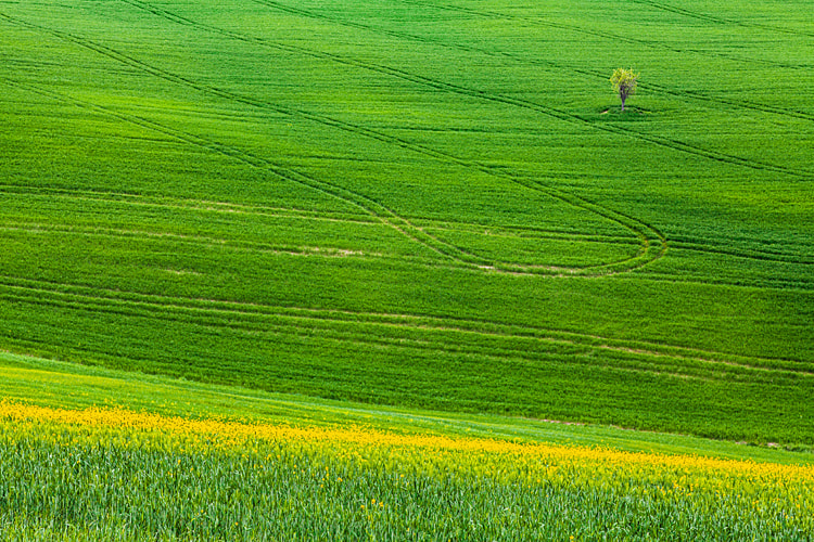 Photograph Tuscany by Teo Teo on 500px