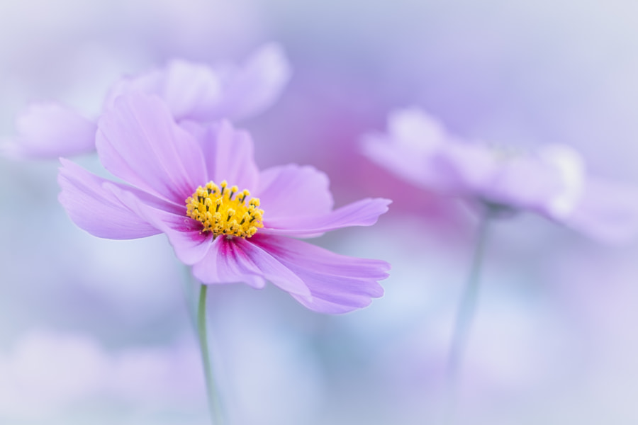 Fantasia by L.th  on 500px.com