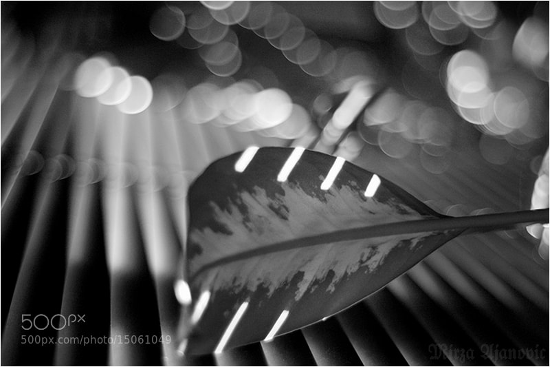 Photograph MUSIC OF LIGHT 02 by Mirza Ajanovic on 500px