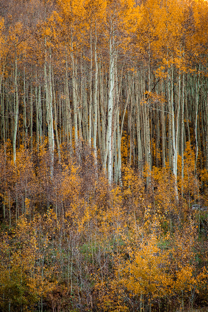 Photograph Autumn in the San Juan Mountains by Valerie Millett on 500px