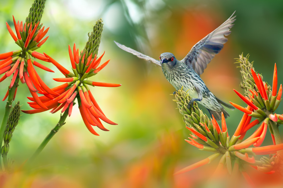~ The LoVe of Erythrina ~, автор — FuYi Chen на 500px.com