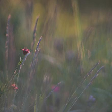 Frühlingswiese/spring meadow