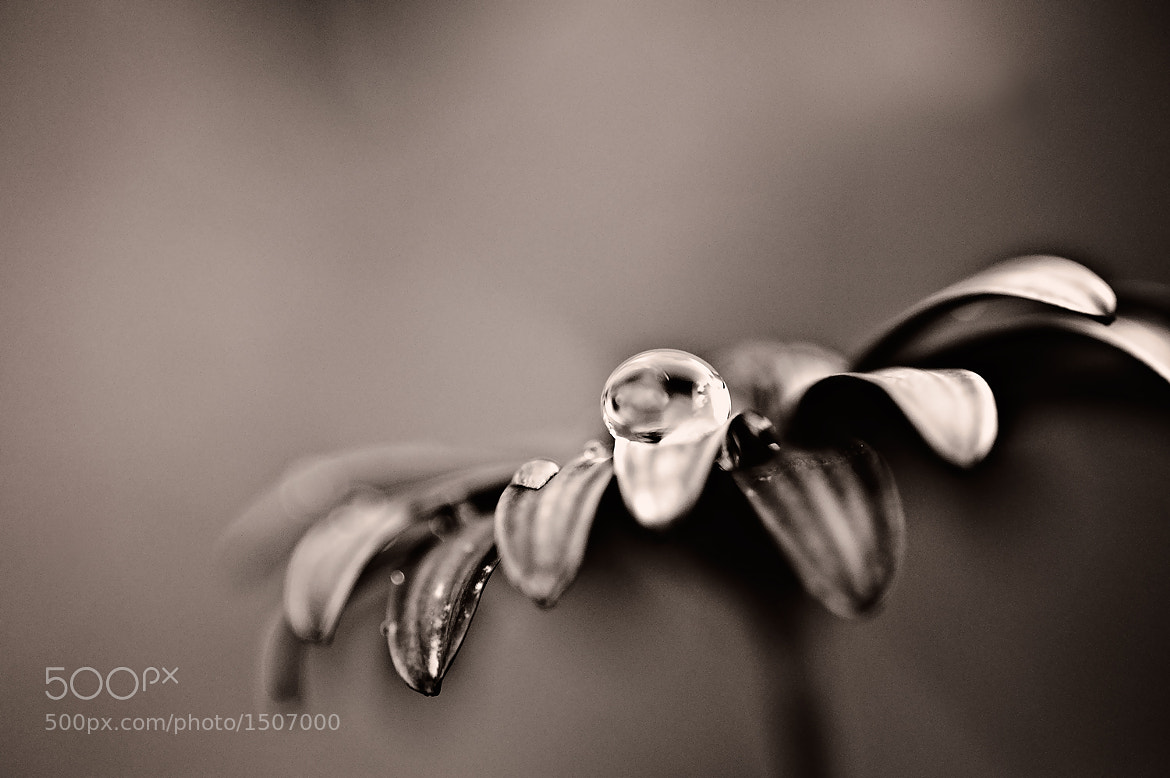 Photograph ~monochrom tears by Michaela Rother on 500px