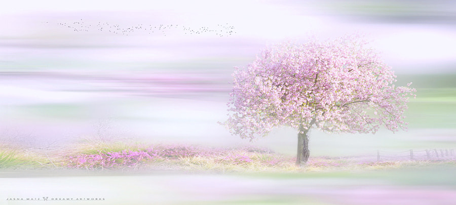 ~ Dreamy Springtime ~ by Jasna Matz on 500px.com