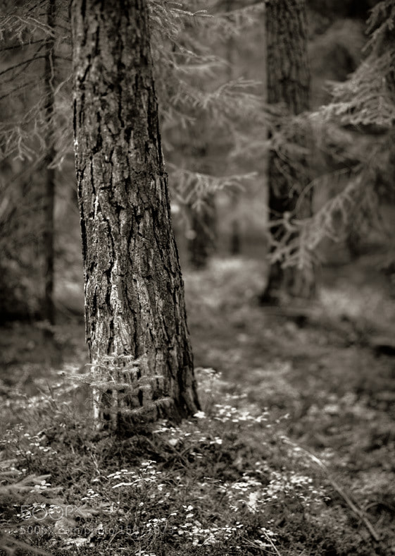 Photograph Tree Trunk #2 by Jiří Vašina on 500px