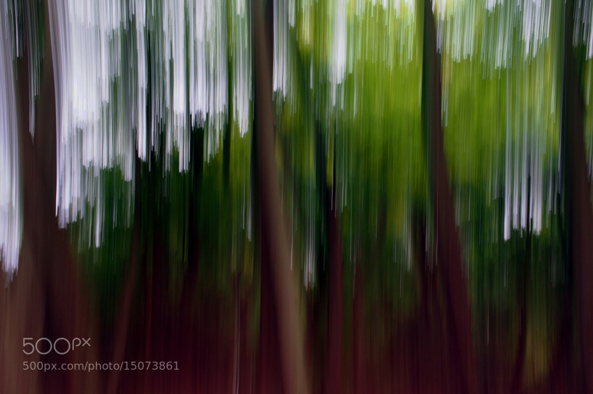 Photograph Jungle Slide by Col Williams on 500px